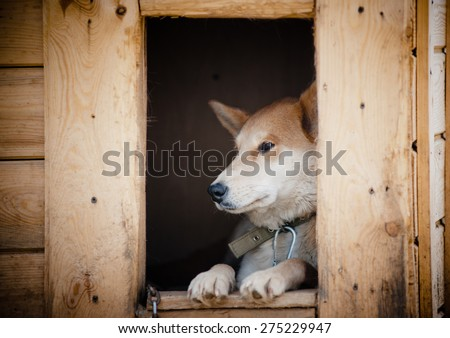 Sad dog in doghouse waiting - stock photo