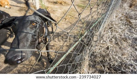 Sad dog locked in cage, wide angle view behind fence - stock photo