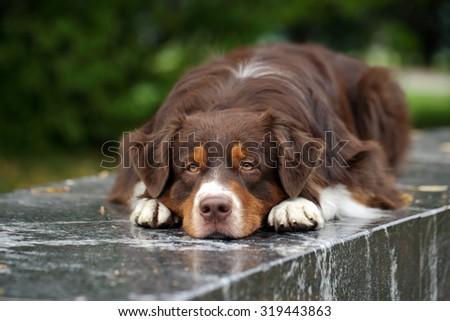 Sad dog lying on a granite bench - stock photo