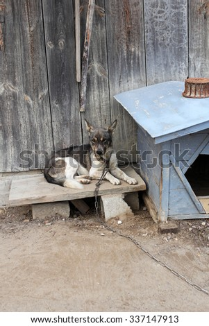 sad dog on chain laying next to kennel - stock photo