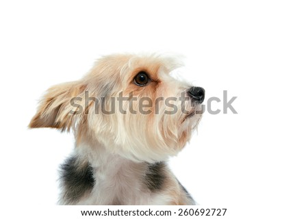sad friendly dog with attentive look isolated on white - stock photo