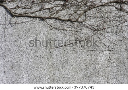 Sad grey stone wall with dry branches of wild common ivy backdrop having grungy style natural decoration outdoor close-up. - stock photo