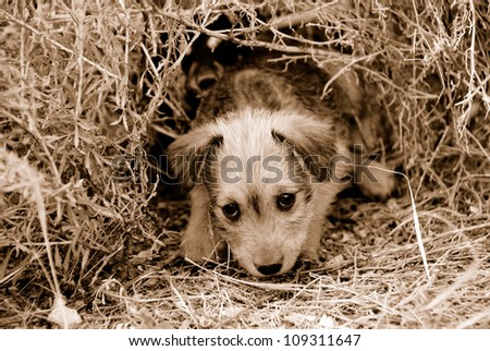 Sad lonely homeless puppy looking in the eyes. Sepia - stock photo