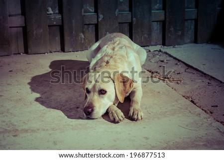 Sad looking dog on the street in  lantern light - stock photo