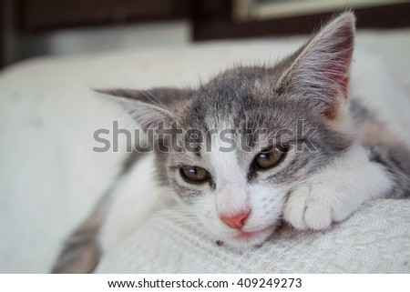 Sad Looking Kitten with the Head on a Sofa - stock photo