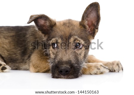 sad mixed breed dog. isolated on white background - stock photo