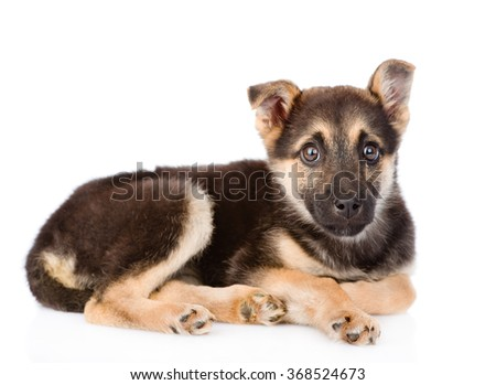 sad mixed breed puppy dog looking at camera. isolated on white background - stock photo