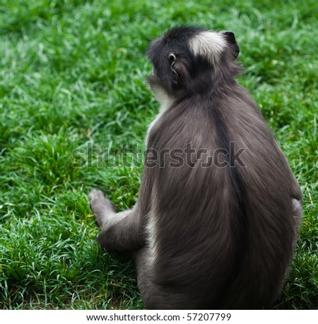 sad monkey - stock photo