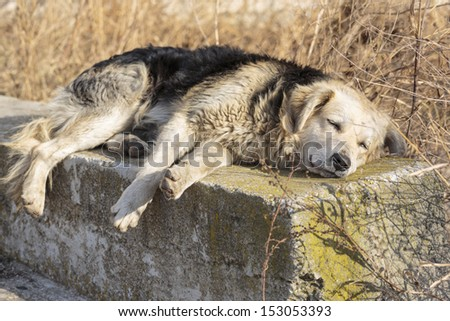 Sad old homeless hungry dog sleeping in the city suburbs. - stock photo