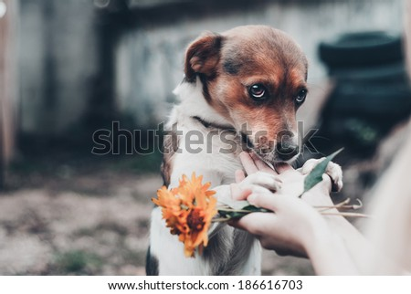 sad pensive dog - stock photo