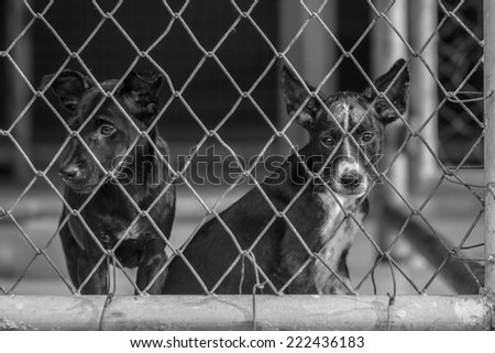 sad puppies in the cage - stock photo