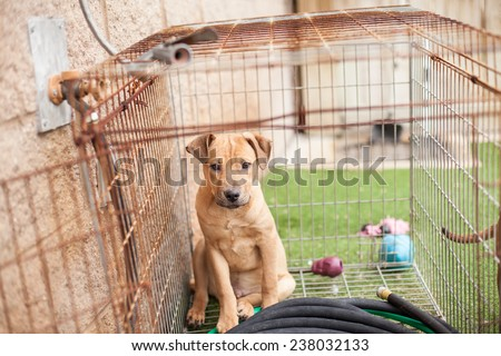 Sad puppy hides in crate at animal shelter - stock photo