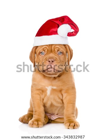 Sad puppy in red christmas hat. Isolated on white background - stock photo