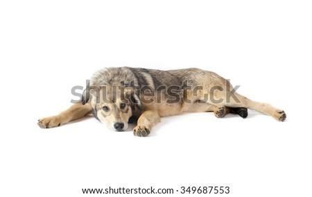 sad puppy isolated over a white, studio shot - stock photo