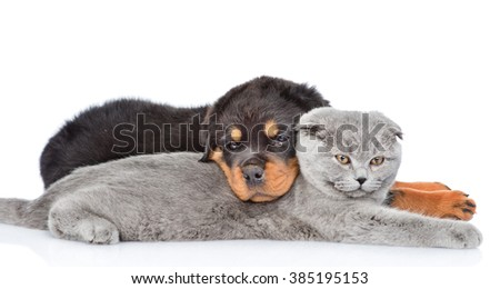 Sad rottweiler puppy embracing cute kitten. Isolated on white background - stock photo