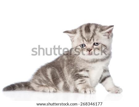 Sad tabby kitten. isolated on white background - stock photo