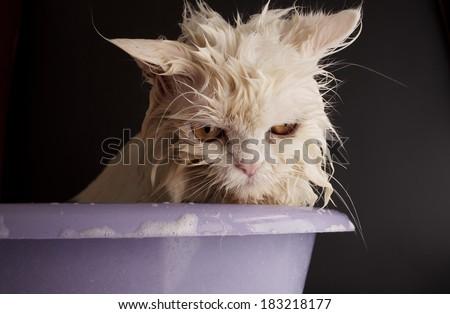 Sad wet cat in a bath - stock photo