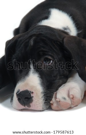 Sad young dog resting on a white background - stock photo