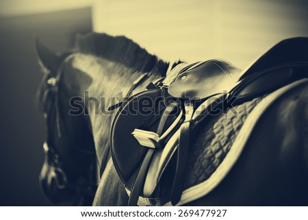 Saddle with stirrups on a back of a sport horse - stock photo