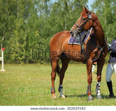 Saddled horse racing in the arena - stock photo