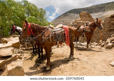 saddled up tour horses waiting for customers in Real de Catorce Mexico - stock photo