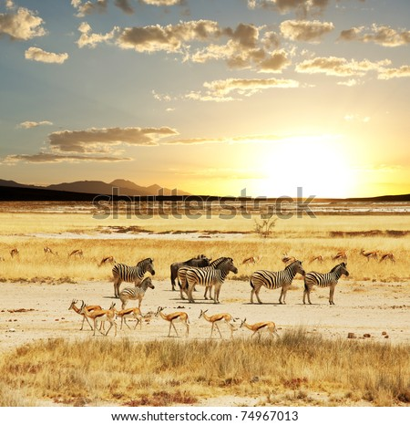 safari - stock photo