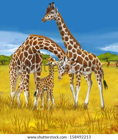 Safari - giraffes - illustration for the children - stock photo