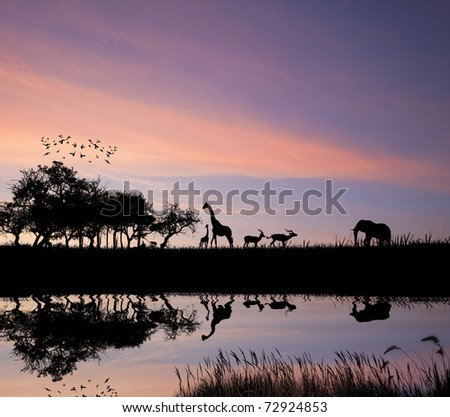 Safari in Africa silhouette of wild animals reflection in water - stock photo
