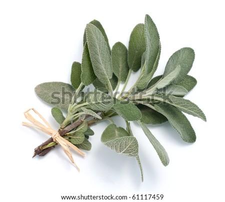 Sage - stock photo