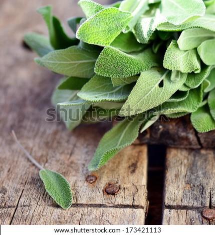 sage herb - stock photo