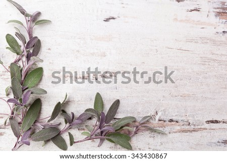 Sage herb on white wooden background with copy space. Alternative herbal medicine. - stock photo