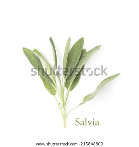Sage on white - stock photo