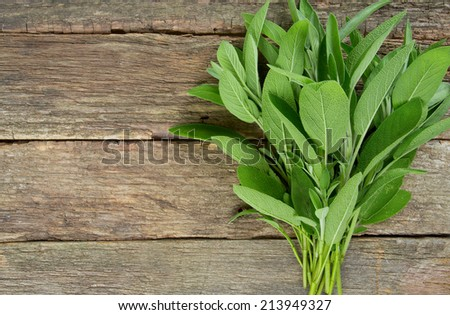 sage on wooden surface - stock photo