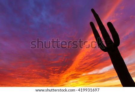 saguaro against the sunset lit clouds in superstition mountains - stock photo