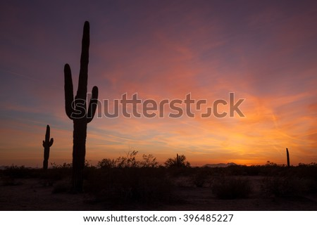 Saguaro Cactus at sunset in the Sonoran desert outside of Phoenix, Arizona - stock photo