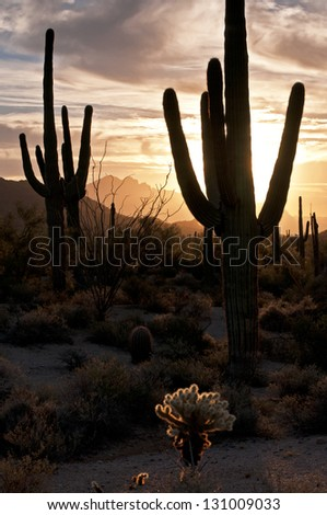 Saguaros at Sunrise Saguaro cactus at sunrise in Usery Mountain Regional Park, Mesa, Arizona. - stock photo