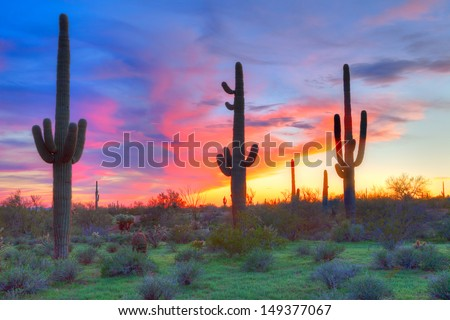 Saguaros at sunset, with blood red sky. - stock photo