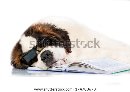 Saint bernard puppy with glasses sleeping on the book isolated on white background - stock photo