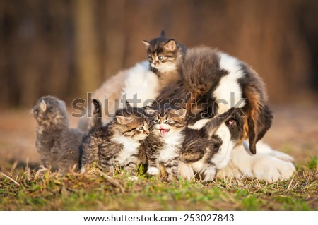 Saint bernard puppy with little kittens  - stock photo