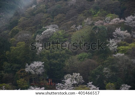 sakura trees on hill - stock photo