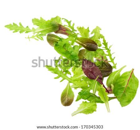 Salad mix with rucola, frisee, radicchio and lamb's lettuce. Isolated on white background - stock photo