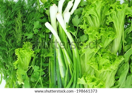 Salad, parsley, fennel, green onions and mint - stock photo
