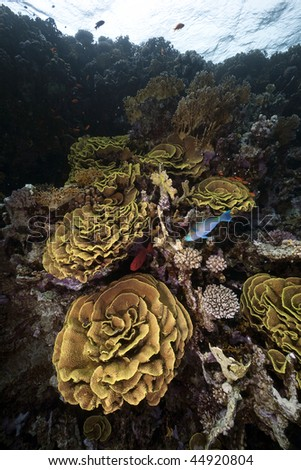 salade coral and ocean - stock photo