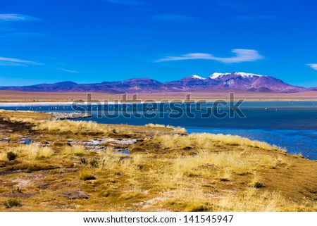 Salar Tara with a wonderful lagoon and vulcano - stock photo