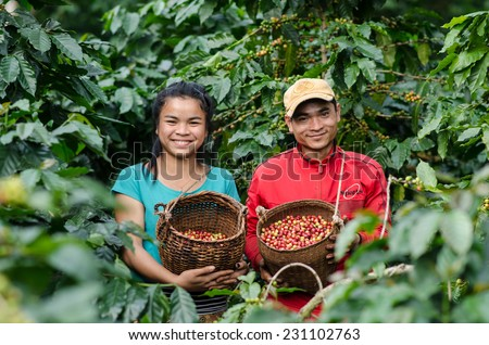 SALAVAN,LAO P D R - NOVEMBER 7,2014 ; Unidentified lavan ethnic coffee farmers are smiling for photo with coffee berries in baskets at vangyawn village,Lao Ngam,Salavan, Lao p d r - stock photo