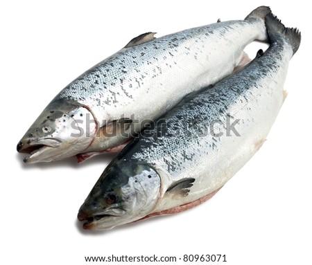 Salmon fishs on white background - stock photo