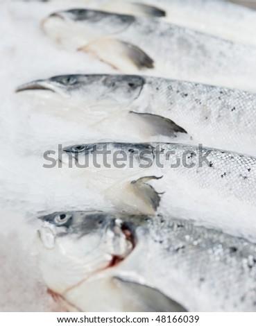 Salmon on cooled market display, closeup shot - stock photo