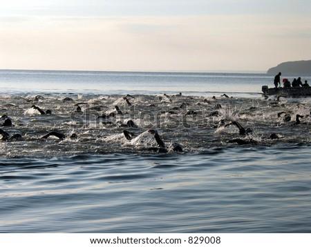 Saltwater Swim - stock photo