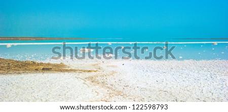 Salty coast of the Dead sea, Israel - stock photo