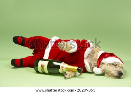 Samll Dog In Santa Costume Lying Down - stock photo